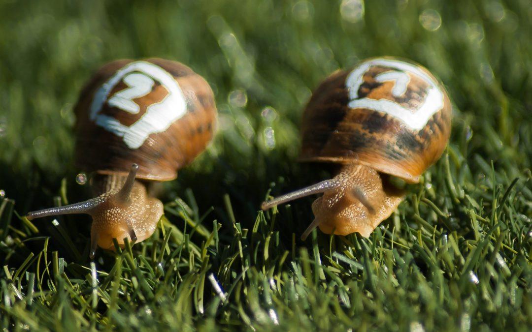 J'ai testé pour vous : le slow entrepreneuriat